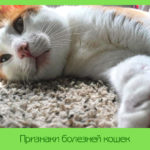 Признаки болезней кошек